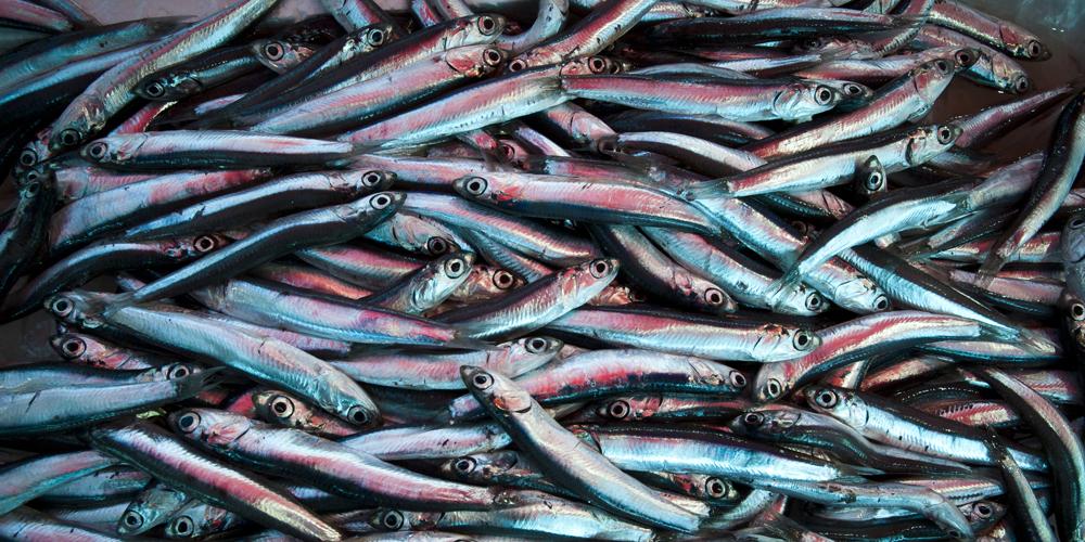 Pesce Azzurro Italiasquisitanet